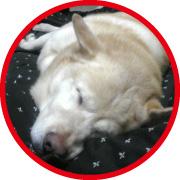 20090926kurt180.jpg,雑種犬,雑種,沖縄三線,雑種人